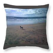 Solitary Doglooking To America Throw Pillow