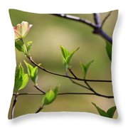 Solitary Dogwood Bloom Throw Pillow
