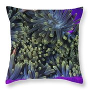 Solomon Islands Amphiprion Perideraion Throw Pillow