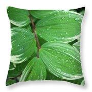 Solomon's Dew Throw Pillow