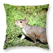 Something In The Air 259 Throw Pillow