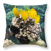 Something To Nibble On Throw Pillow