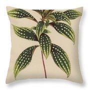 Sonerila Margaritacea Throw Pillow