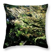 Song Of The Light 2. Throw Pillow