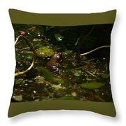 Song Of The South Throw Pillow
