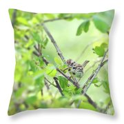 Song Sparrow With Dinner Throw Pillow
