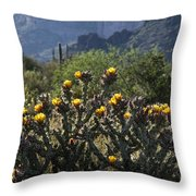 Sonoran Desert Cholla  Throw Pillow