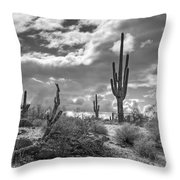 Sonoran Desert In Black And White  Throw Pillow