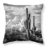 Sonoran Desert View Throw Pillow