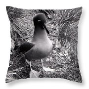 Sooty Albatross On A South Georgia Cliffside Throw Pillow