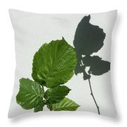 Sophisticated Shadows - Glossy Hazelnut Leaves On White Stucco - Vertical View Upwards Right Throw Pillow