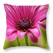 Soprano On A Brilliant Spring Day 3 Throw Pillow