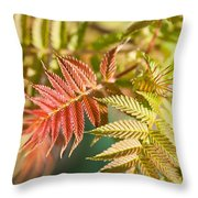 Sorbaria Sorbifolia Spring Foliage Throw Pillow