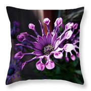 South African Daisy Throw Pillow