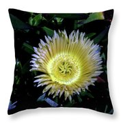 South African Flower 1 Throw Pillow