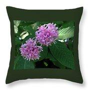 South African Flower 2 Throw Pillow