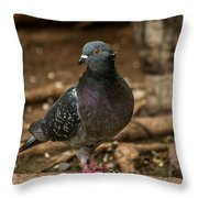 South American Pigeon  Throw Pillow
