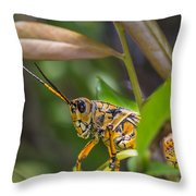 Southeastern Lubber Grasshopper Throw Pillow