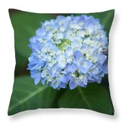 Southern Blue Hydrangea Blooming Throw Pillow