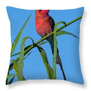 Southern Carmine Bee-eater  Throw Pillow