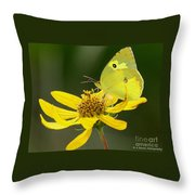 Southern Dogface Butterfly Throw Pillow