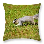 Southern Fox Squirrel Throw Pillow