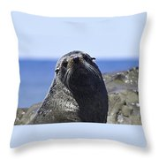 Southern Fur Seal Throw Pillow