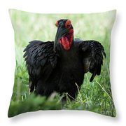 Southern Ground Hornbill Eating An Insect In Tarangire Throw Pillow