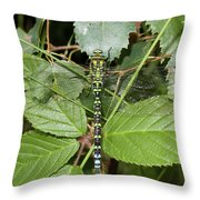 Southern Hawker Throw Pillow