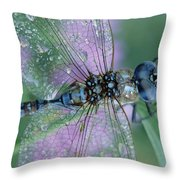 Southern Hawker Dragonfly Aeshna Cyanea Throw Pillow by Tim Fitzharris