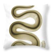 Southern Pacific Rattlesnake, X-ray Throw Pillow