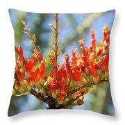 Southwest Ocotillo Bloom Throw Pillow