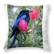 Spangled Drongo Throw Pillow