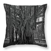 Spanish Moss Of The Tree Throw Pillow