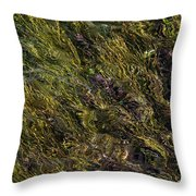 Sparkling Clear Waters Throw Pillow