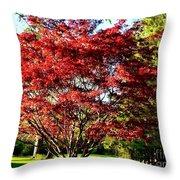 Sparkling Japaneese Maple Tree Throw Pillow