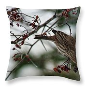 Sparrow Eating Berry Throw Pillow