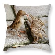 Sparrow Feeding Fledgelings Throw Pillow