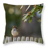 Sparrow In Colonial Williamsburg Throw Pillow