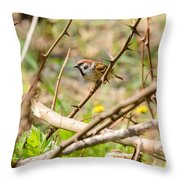 Sparrow In The Thorns Throw Pillow