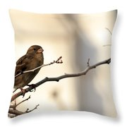 Sparrow On A Limb Throw Pillow