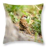 Sparrow On The Ground Throw Pillow