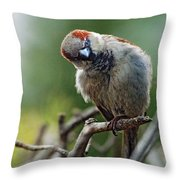 Sparrow Puzzled At What It Sees Throw Pillow