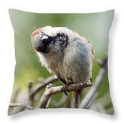 Sparrow Tilts It Head Throw Pillow