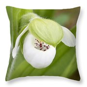 Sparrow's-egg Orchid  Throw Pillow