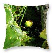 Spatterdock - Wild Yellow Water Lily Throw Pillow