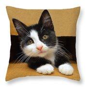 Special Delivery Tuxedo Kitten Throw Pillow