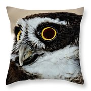 Spectacle Owl Throw Pillow