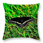 Spicebush Swallow Tail Throw Pillow