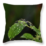 Spider And The Shower Throw Pillow